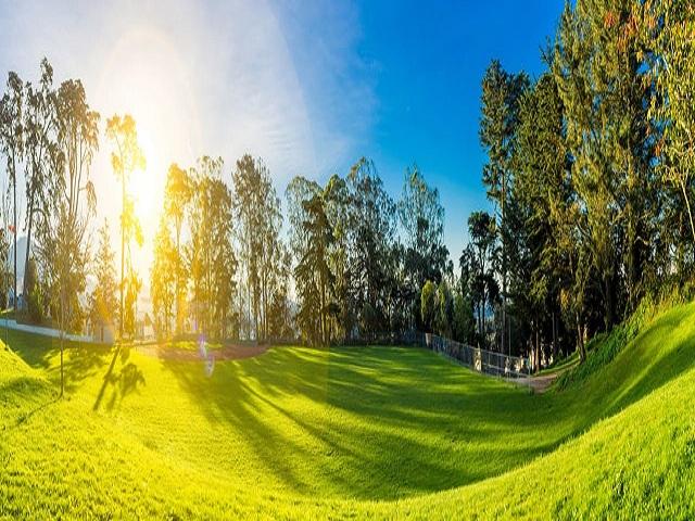 Golfbana i solsken